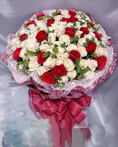 77枝白玫瑰/美丽的梦
