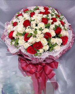 77枝白玫瑰/美麗的夢