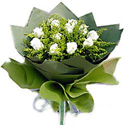 11枝白玫瑰/���的��