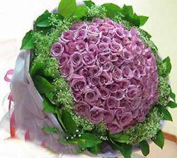 99枝紫玫瑰/愛你如初