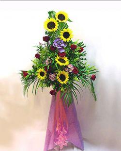 开业花篮/骏业宏开: 向日葵(可用太阳花等代替)、红玫瑰、小缤菊、加拿大黄莺、散尾葵等;