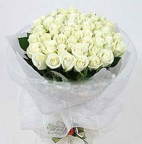 33枝白玫瑰/清晨之��