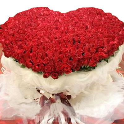 999枝紅玫瑰/愛的籬笆