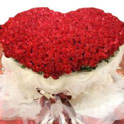 999枝红玫瑰/爱的篱笆