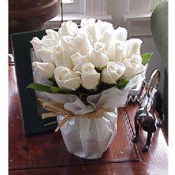 24枝白玫瑰/冬之恋曲