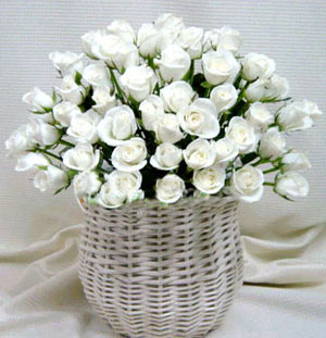 52枝白玫瑰/純潔的祝福