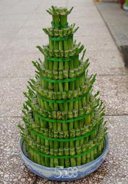 绿植/富贵竹