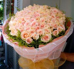 66枝玫瑰/钟情于你