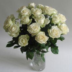 21枝白玫瑰/纯洁的祝福: 21枝白玫瑰。