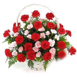 48枝康乃馨/暖暖祝福: 33枝红色康乃馨,15枝多头粉色康乃馨,绿叶间插,排草