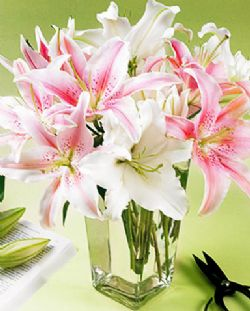 花瓶百合/陪伴著你: 5朵白色香水百合,6朵粉色香水百合