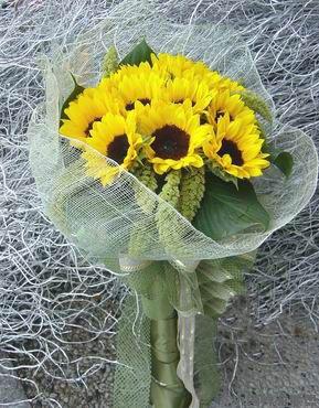 11枝向日葵/温暖心情