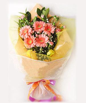 5粉色太阳菊/祝福: 5粉色太阳菊,扶郎