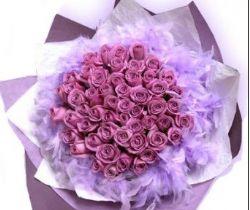 33枝紫玫瑰/相知相许
