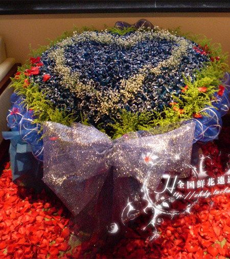 520朵蓝玫瑰/我爱你
