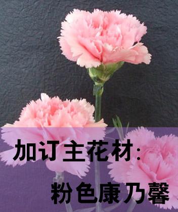 加订主花材:粉康乃馨