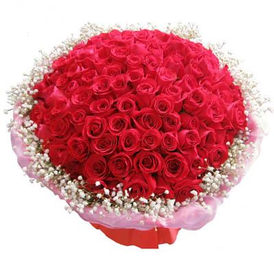 天使之吻/99朵红玫瑰