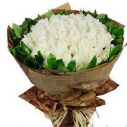 纯正浪漫/99朵白玫瑰
