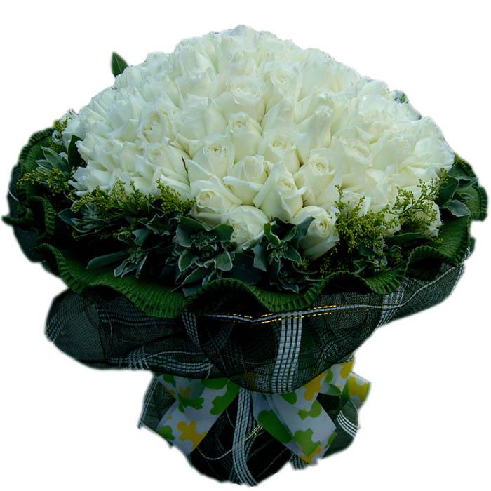 唯一的爱/99朵白玫瑰