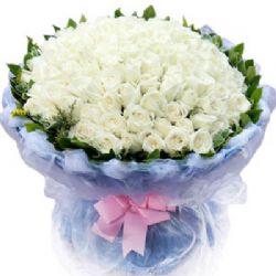 高贵公主/99朵白玫瑰