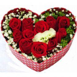 心心相印/11朵红玫瑰