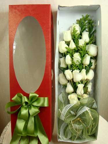 青春美丽/22朵白玫瑰