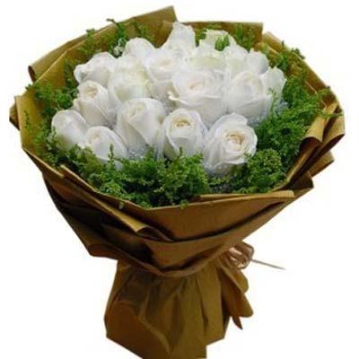 执着的爱/18朵白玫瑰