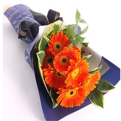 祝福/12朵太阳花: 12朵橘色太阳花、叶上黄金绿叶搭配