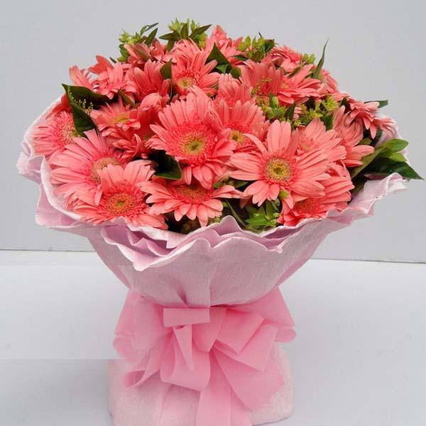 爱与关怀/33朵太阳花: 33朵粉色扶郎,点缀绿叶