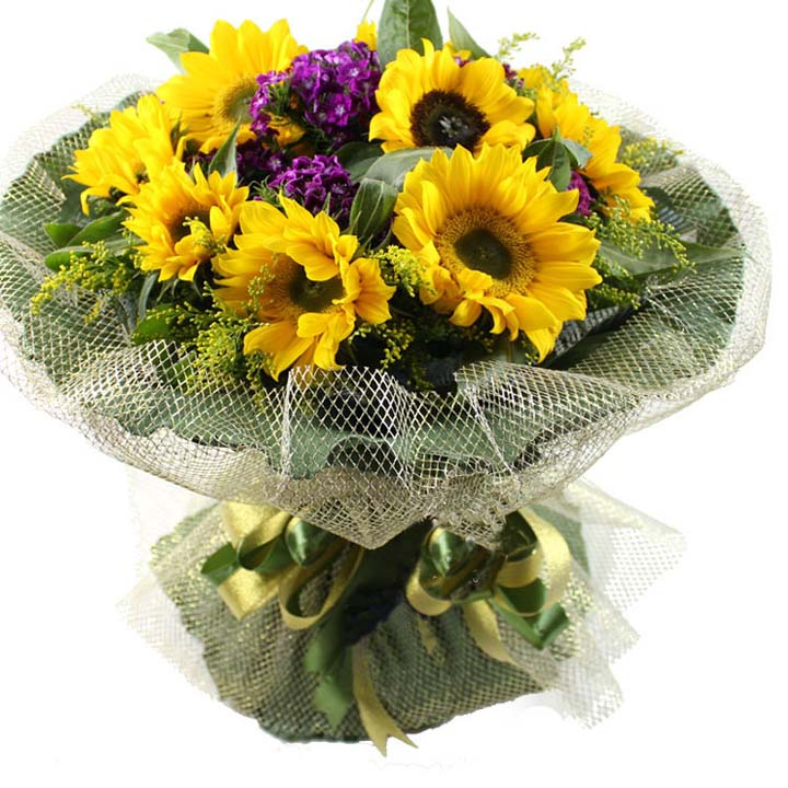 暖暖亲情/11朵向日葵