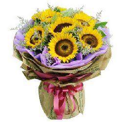 你的笑脸/6朵向日葵