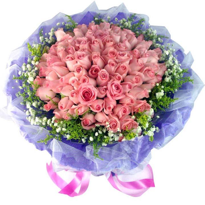 爱的罗曼史/66朵粉玫瑰