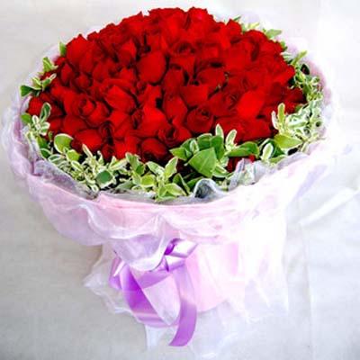 我的�廴�/101朵�t玫瑰