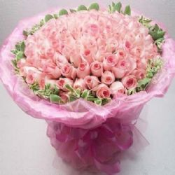 浪漫与激情/101朵粉玫瑰