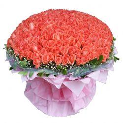 最美祝福/365朵粉玫瑰