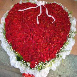 爱到永久/999朵红玫瑰