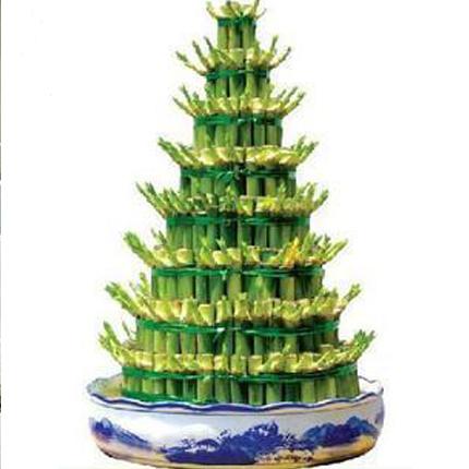 盆栽绿植花卉/富贵竹