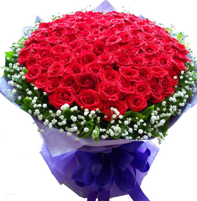 求婚/101朵红玫瑰
