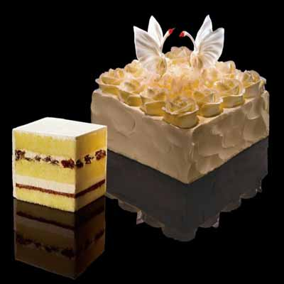 黑天鹅蛋糕/天使之爱