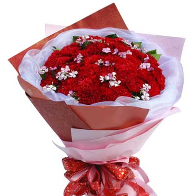 33枝红色康乃馨/温暖怀抱