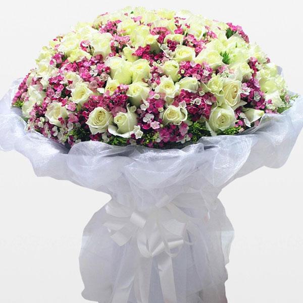66枝极品白玫瑰/纯美爱恋 (白玫瑰 爱情 友情 生日 教师 母亲 情人 圣诞)