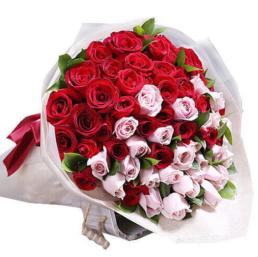 66朵红色戴安娜混搭玫瑰/有你才美